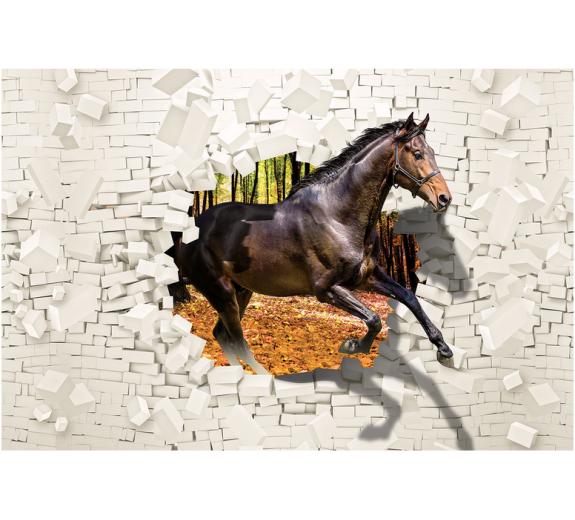 Konie 2964