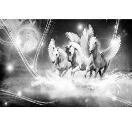 Konie 589