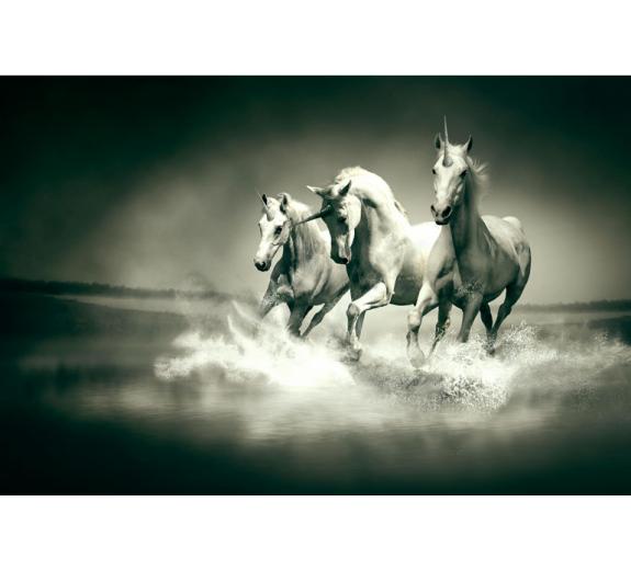 Konie 590