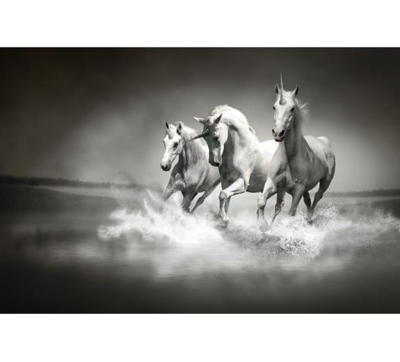 Konie 430