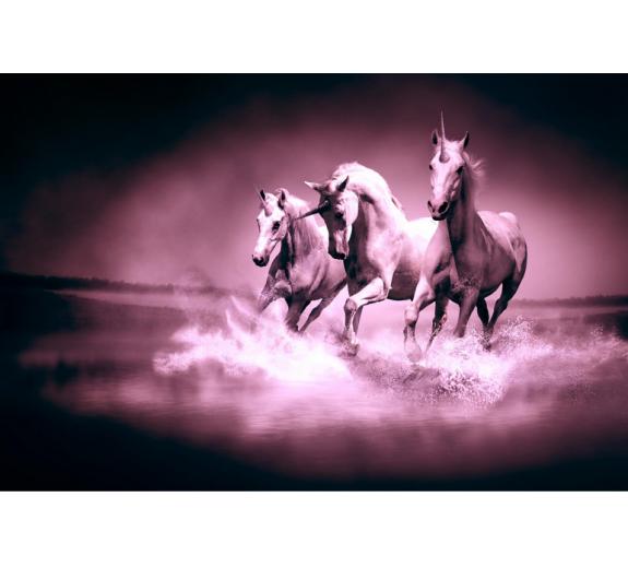 Konie 428