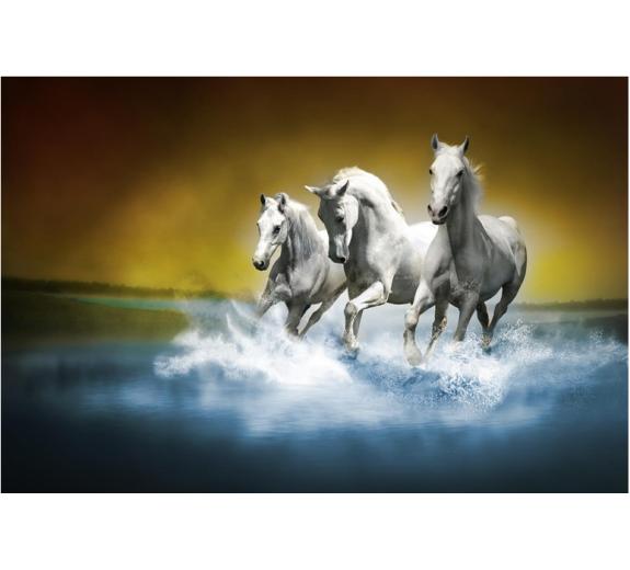 Konie 429