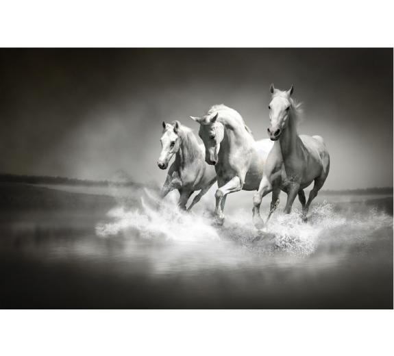 Konie 425