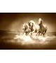 Konie 426