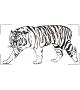 Tygrys NZ12