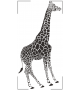 Żyrafy NZ41