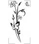 Orchidea NKW1